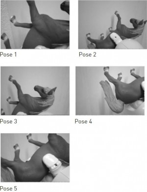 Images of horses in various poses